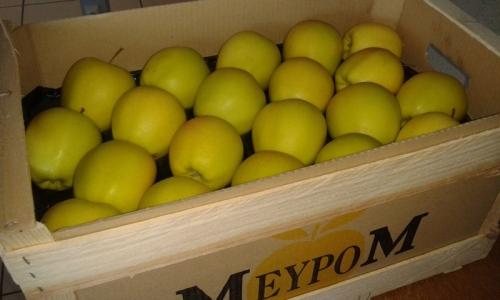 cajas Meypom cat II