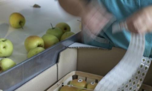 fabrication manuelle des paniers